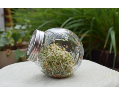 Банка проращиватель семян 450мл