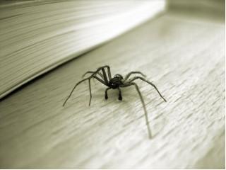 Как избавиться от пауков и паутины.